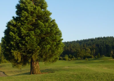 Cross Creek Golf Course | Dallas, Oregon